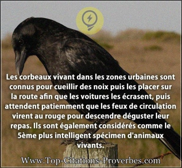 Citation animaux archives page 7 de 8 top citations proverbes - Les danois sont beaux ...