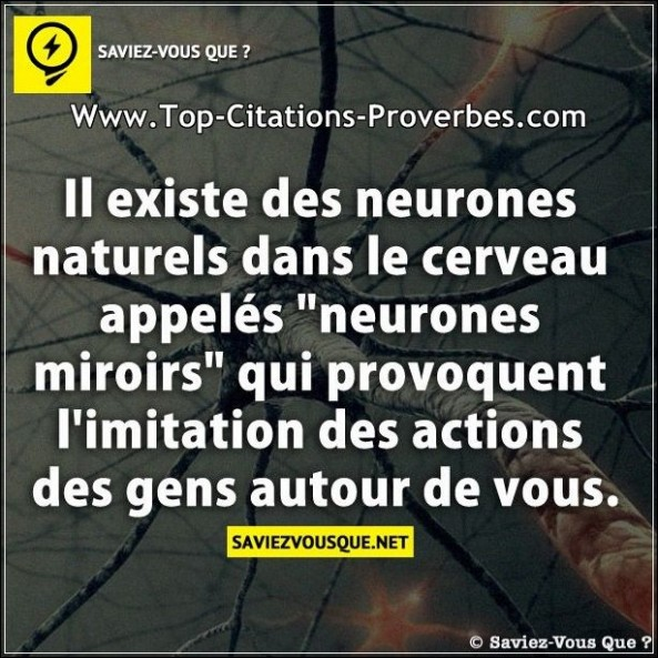 Citation nature archives top citations proverbes for Le cerveau en miroir