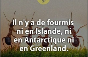 Citation courte : Il n'y a de fourmis ni en Islande, ni en Antarctique ni en Greenland.
