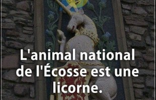 Citation courte : L'animal national de l'Écosse est une licorne.