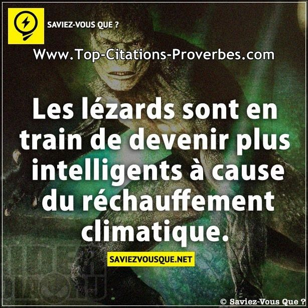 Extrêmement lézards sont en train de devenir plus intelligents à cause du  YN06