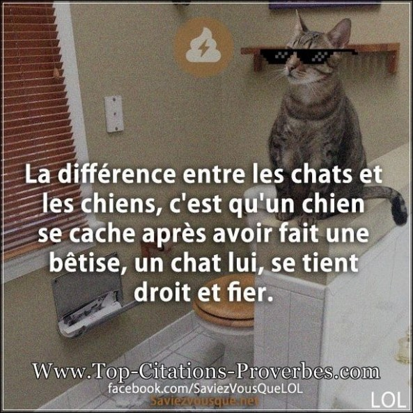 Blague chat archives page 2 sur 2 top citations proverbes - Difference entre conciliateur et mediateur ...