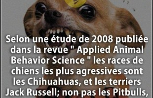 "Citation chien : Selon une étude de 2008 publiée dans la revue "" Applied Animal Behavior Science "" l..."