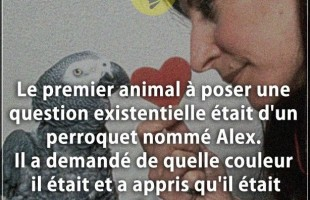 Citation couleur : Le premier animal à poser une question existentielle était d'un perroquet nommé A...