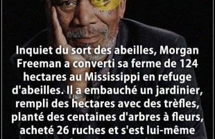 Citation fleur : Inquiet du sort des abeilles, Morgan Freeman a converti sa ferme de 124 hectares au...