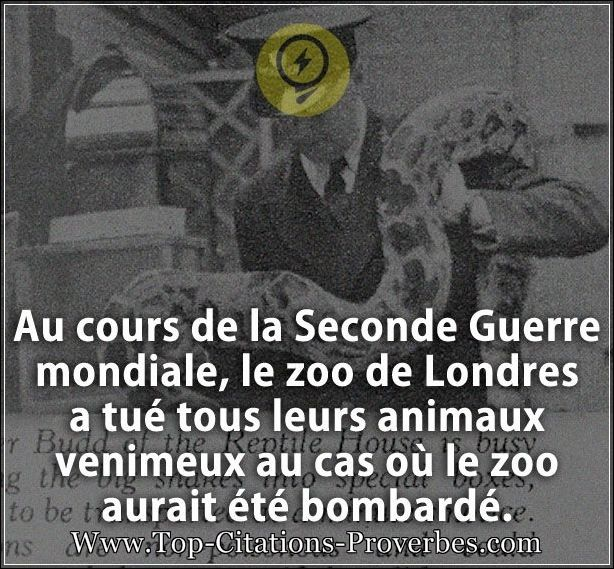 Citation Guerre Au Cours De La Seconde Guerre Mondiale Le