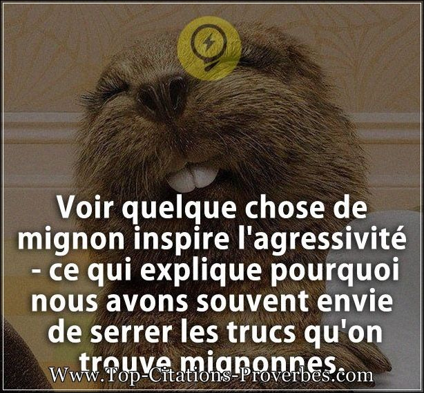 citations mignon de relation