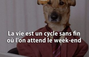 La vie est un cycle sans fin où l'on attend le week-end